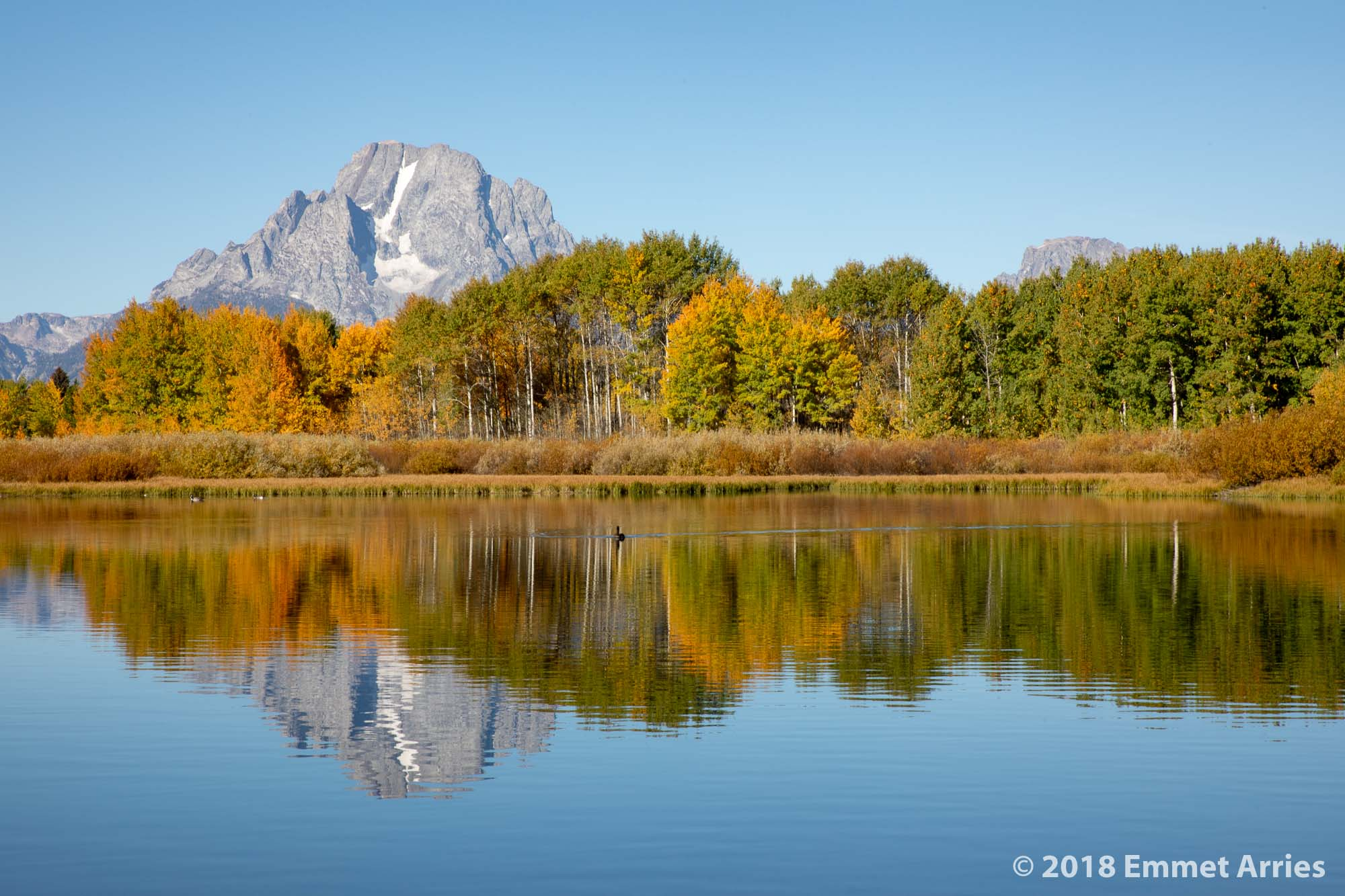 In the fall, the trees at Oxbow bend turn brilliant reds, yellows, and oranges. It is truly magnificent.